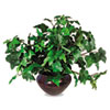 Nu-Dell Artificial Ivy Plant in Mahogany Vase