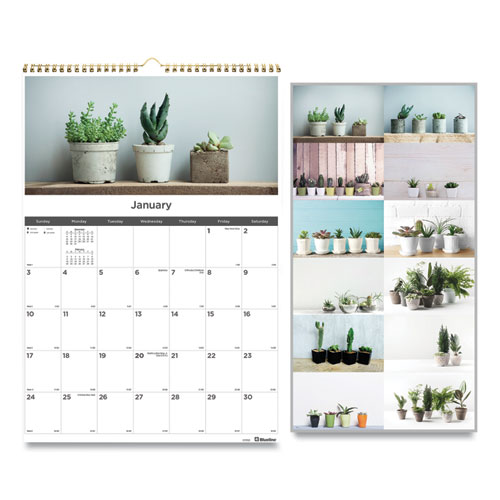 12-Month Wall Calendar, 12 x 17, Succulent Plants, 2021