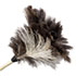 """<strong>Boardwalk®</strong><br />Professional Ostrich Feather Duster, 7"""" Handle"""